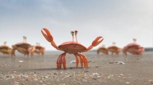 c_delijn_crabs_sq010_sh060_v014_0308